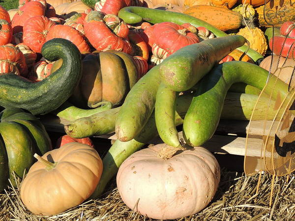 Photograph - Bright Colored Gourds II by Kimberly Perry