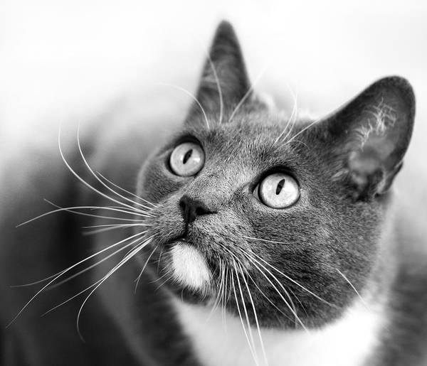 Photograph - Bright Eyes by Marc Huebner