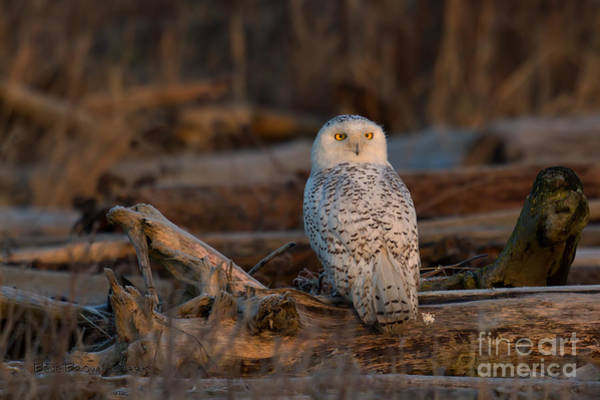 Photograph - Bright Eyes by Beve Brown-Clark Photography