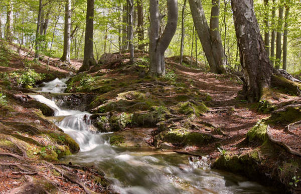 Photograph - Bright Forest Creek by Dreamland Media