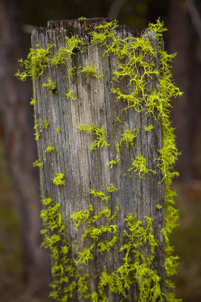 Painting - Bright Green Lace by Omaste Witkowski