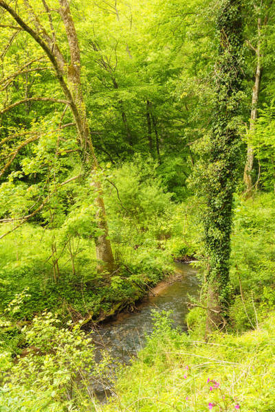 Photograph - Bright Green Trees And A Stream In Spring by Matthias Hauser