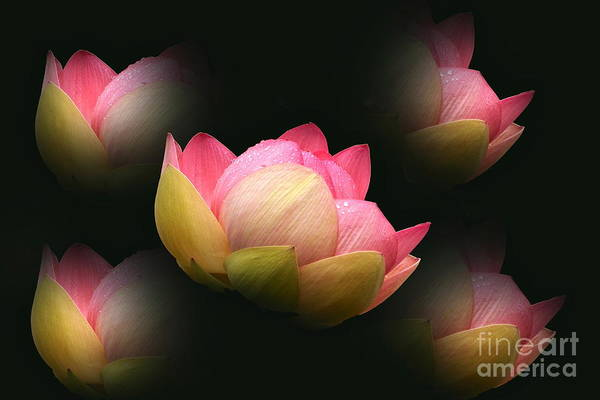 Photograph - Bright Lotus Echoes by Byron Varvarigos