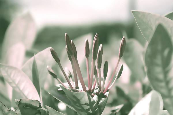 Photograph - Bright Moment  by Milena Ilieva