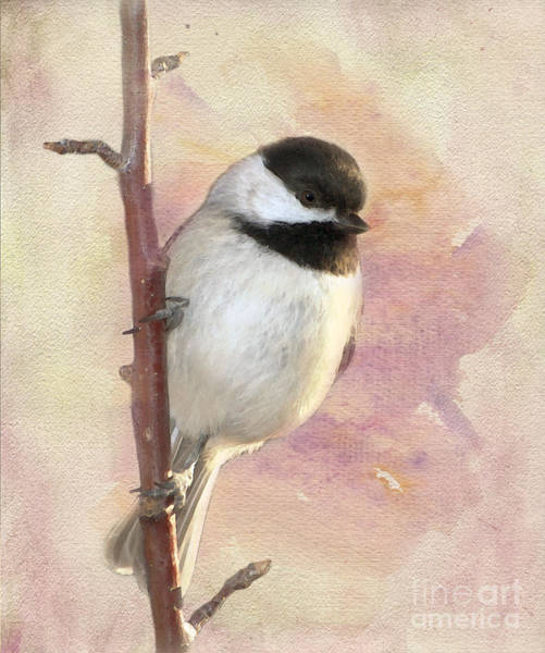 Chickadees Photograph - Bright New Day by Betty LaRue