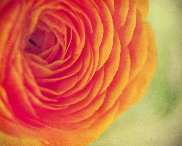 Wall Art - Photograph - Bright Orange Bloom by Amelia Matarazzo