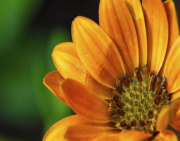Wall Art - Photograph - Bright Orange Flower by Dave Sandt