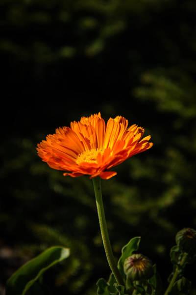 Photograph - Bright Orange by Robert Mitchell