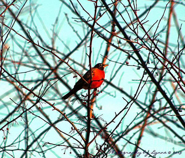 Photograph - Bright Red Robin by Gena Weiser