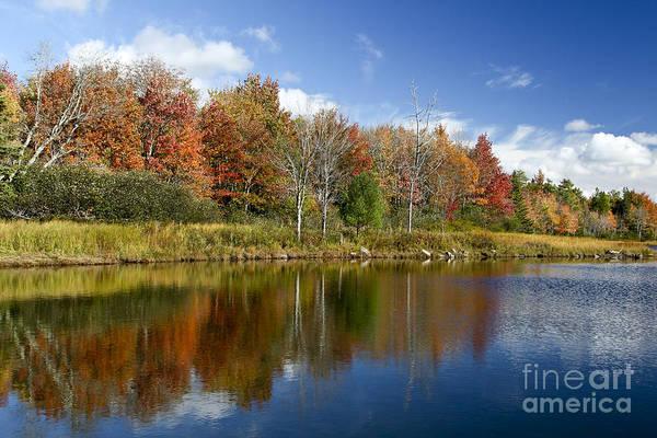 Photograph - Bright Reflections by Karin Pinkham