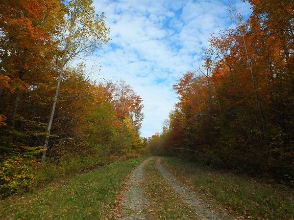 Aroostook County Photograph - Bright Trail by Gene Cyr