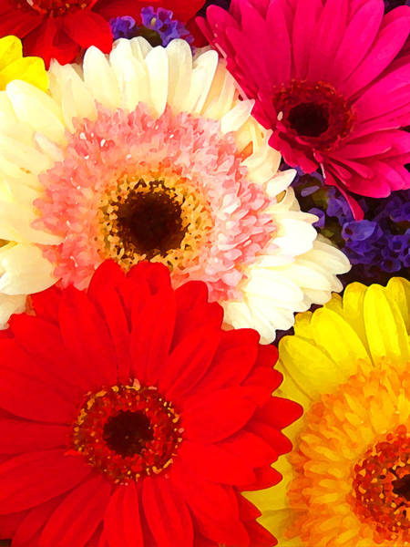 Gerbera Painting - Brightly Colored Gerbers by Amy Vangsgard