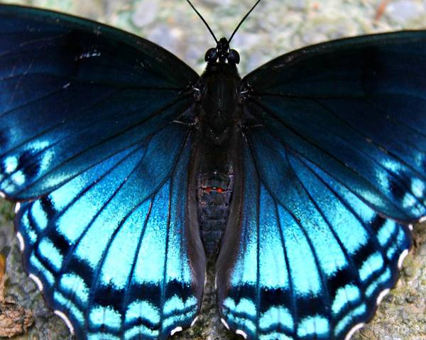 Photograph - Brilliant Butterfly by Candice Trimble