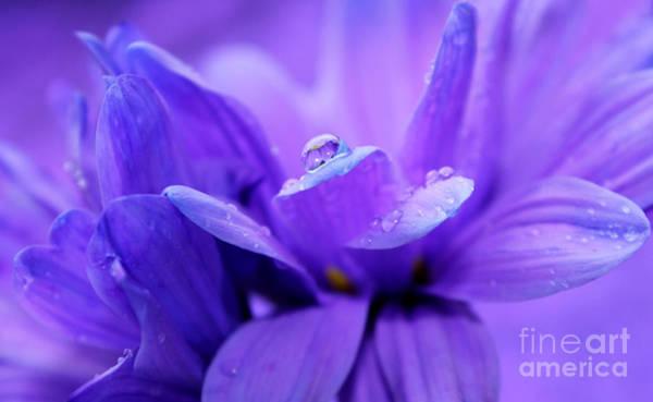 Gerbera Daisy Photograph - Brilliant Nature by Krissy Katsimbras