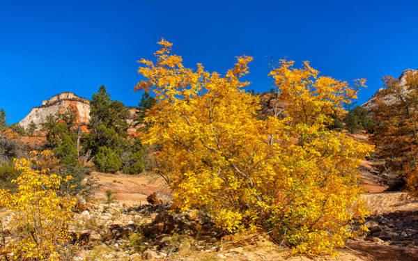 Photograph - Brilliant Zion Colors by John M Bailey