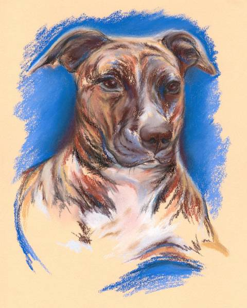 Pastel - Brindle Pit Bull Portrait by MM Anderson