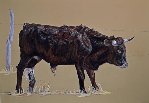 Brindle Steer Art Print by Ann Marie Chaffin