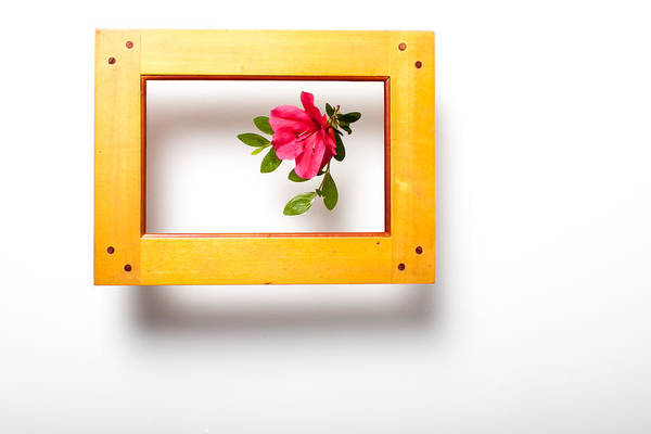 Azaleas Photograph - Bring The Outside In by W Chris Fooshee