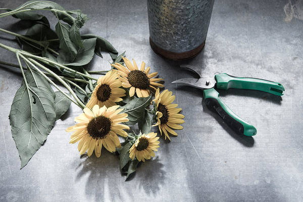 Photograph - Bringing Blooms Indoors by Jennifer Grossnickle