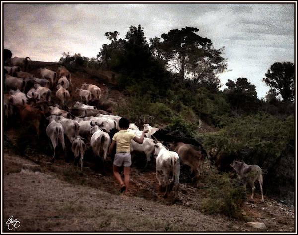 Photograph - Bringing Home The Cattle by Wayne King