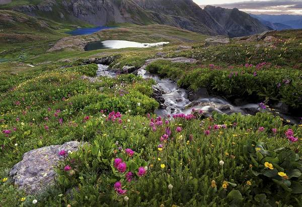 Alpine Photograph - Bringing Life To Ice Lake Basin by Mike Berenson