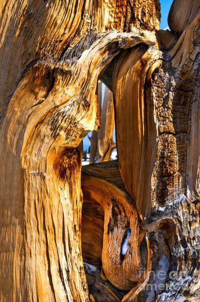 Pyrography - Bristle Pinecone Windows by Mae Wertz