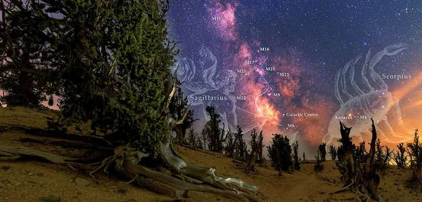Cedar Breaks Photograph - Bristlecone Forest And The Milky Way by Babak Tafreshi