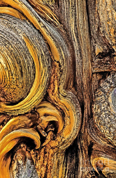 Photograph - Bristlecone Pine Bark Detail White Mountains Ca by Dave Welling