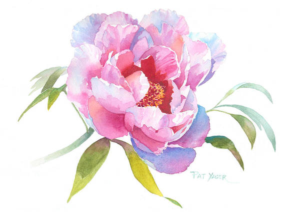 Wall Art - Painting - British Columbia Peony by Pat Yager