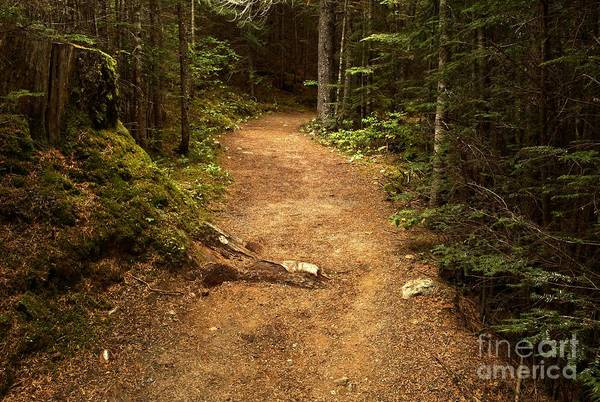 Photograph - British Columbia Rain Forest Trail by Adam Jewell