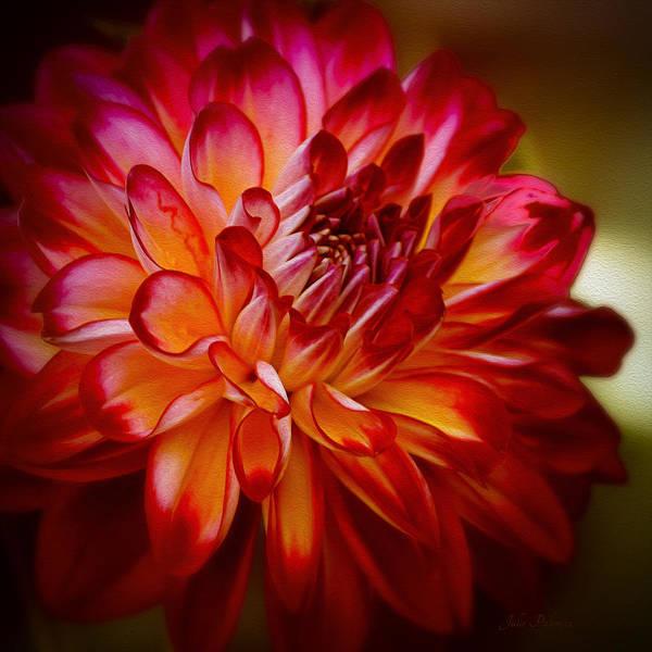 Chicago Botanic Garden Photograph - Brittany Red Dahlia by Julie Palencia