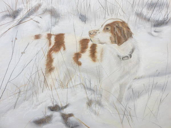 Painting - Brittany Spaniel by Sherri Anderson