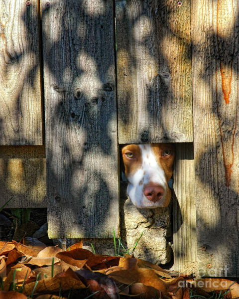 Wall Art - Photograph - Brittany Watching Through The Fence by Timothy Flanigan and Debbie Flanigan Nature Exposure