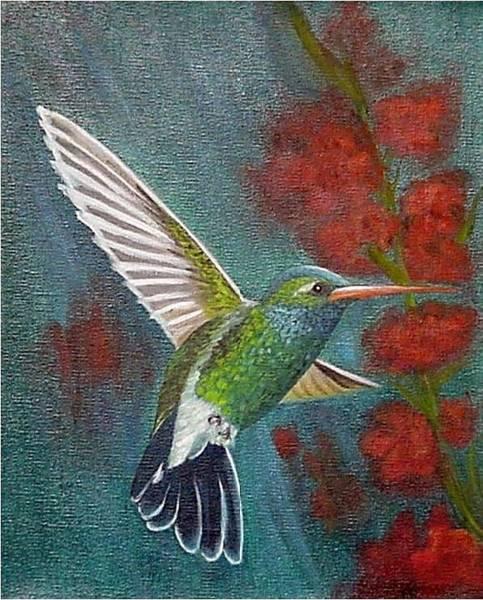 Painting - Broad-billed Hummingbird by Fran Brooks