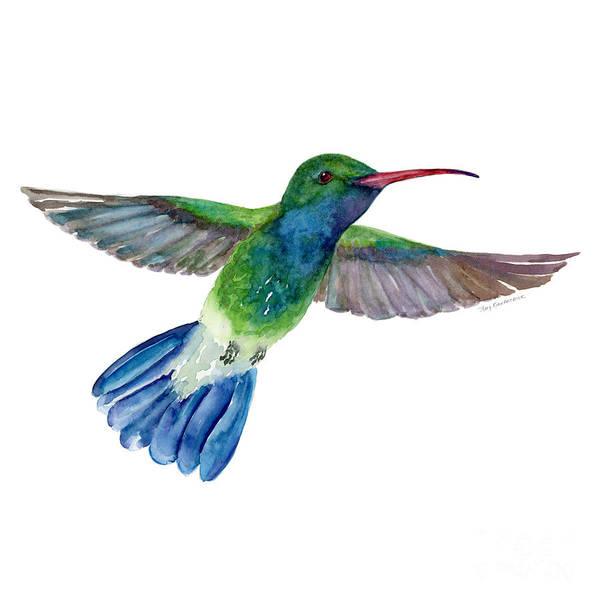 Tails Painting - Broadbilled Fan Tail Hummingbird by Amy Kirkpatrick