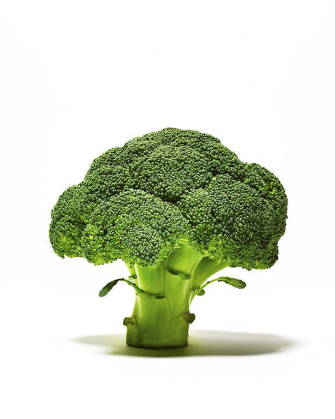 Broccoli Head On Whte Background Art Print by TS Photography