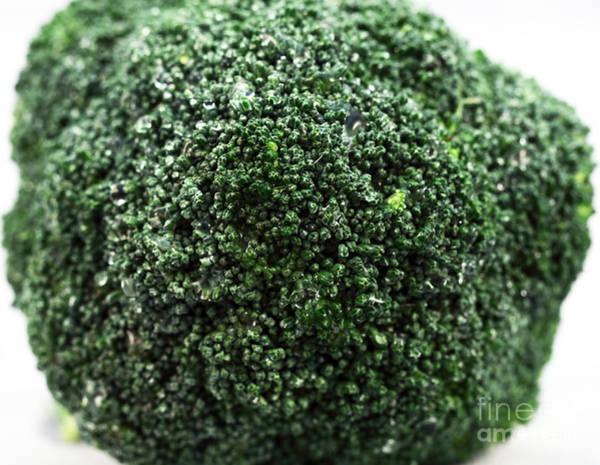 Photograph - Broccoli by John Rizzuto