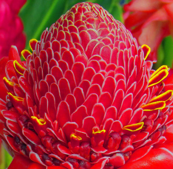 Photograph - Bromealiade Petals by Tony and Kristi Middleton