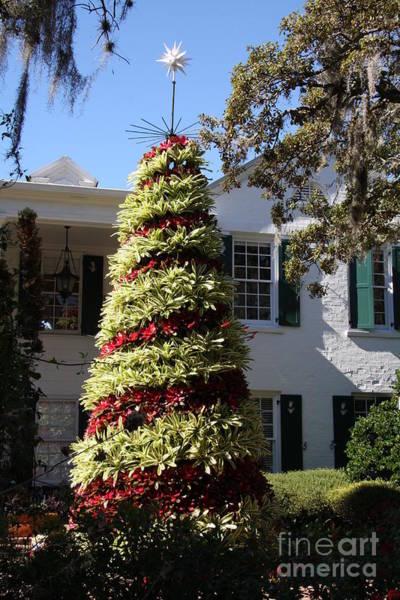 Bromelia Photograph - Bromelia Christmas Tree by Christiane Schulze Art And Photography