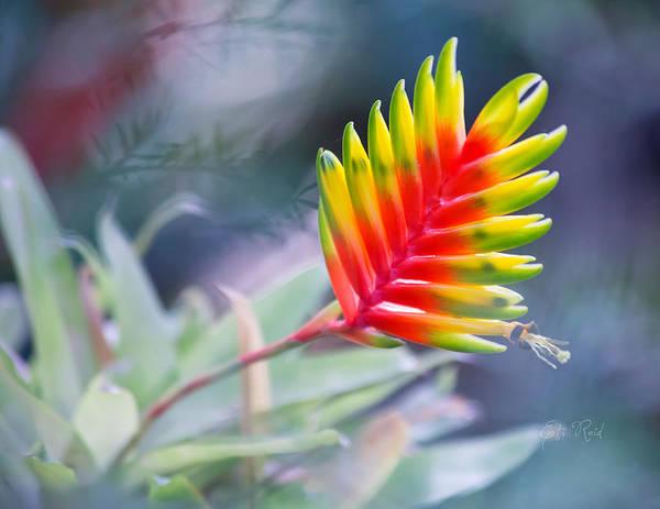Bromelia Photograph - Bromeliad Beauty by Eti Reid
