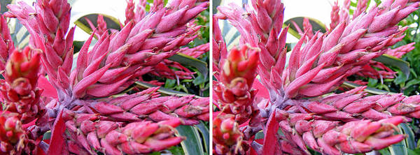 Photograph - Bromeliad Blossom In Stereo by Duane McCullough