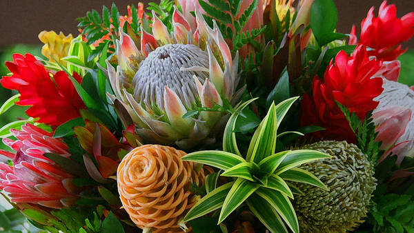 Photograph - Bromeliad Bouquet by Tony and Kristi Middleton
