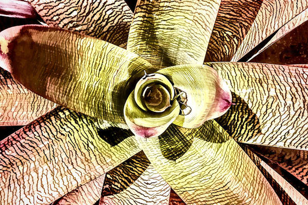 Digital Art - Bromeliad Symmetry by Photographic Art by Russel Ray Photos