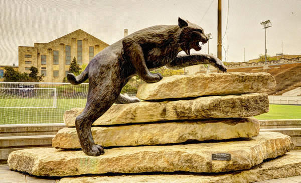Kansas State University Photograph - Kansas State Bronze Wildcat by Jean Hutchison