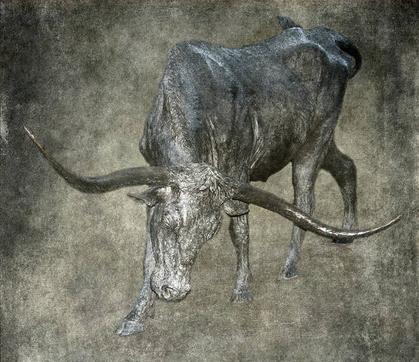 Wall Art - Photograph - Bronzed Longhorn by Angie Vogel