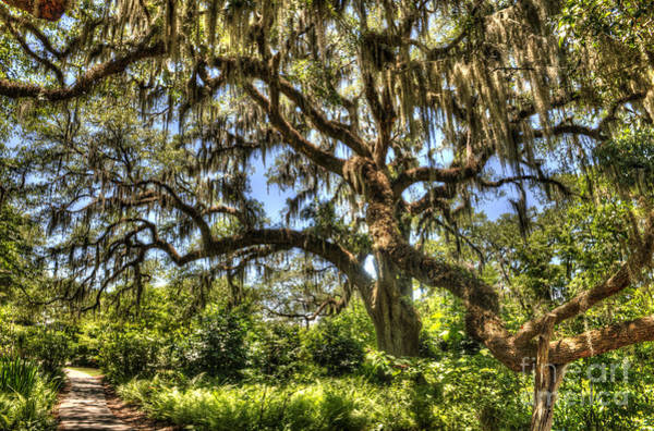 Photograph - Brookgreen Gardens by Dale Powell