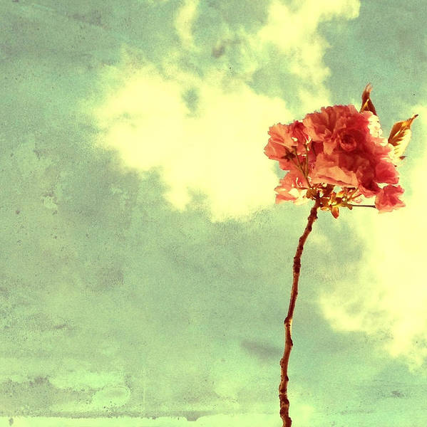 Photograph - Brooklyn Blossom by Natasha Marco