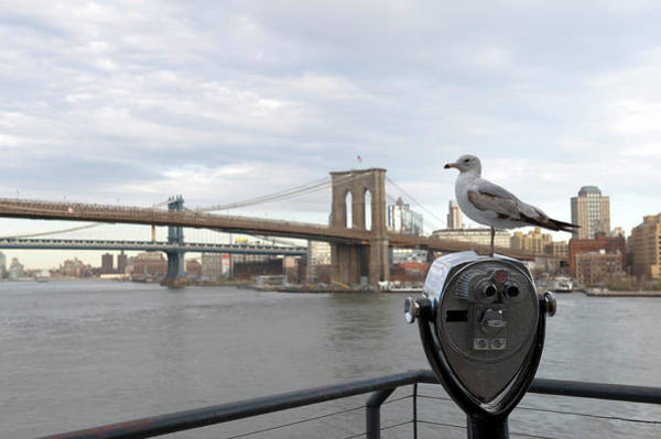 Binoculars Photograph - Brooklyn Bridge by Kevinjeon00