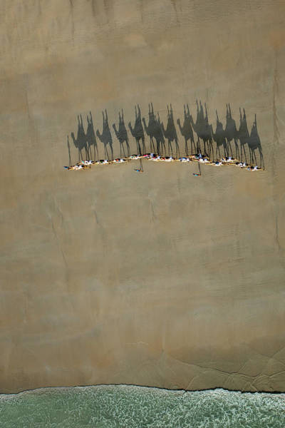 Wall Art - Photograph - Broome Camel Train by Renee Doyle