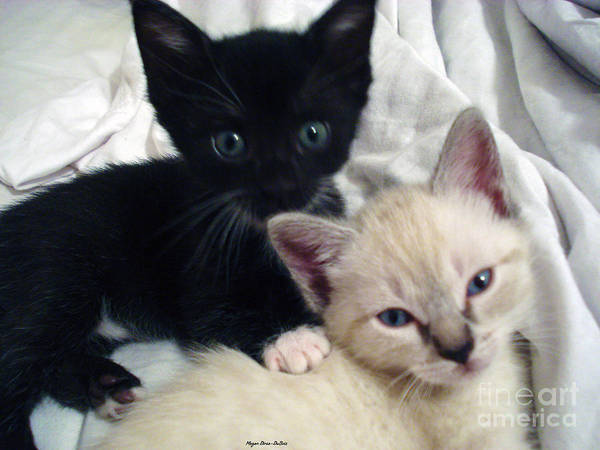 Photograph - Brother N Sister Kittens by Megan Dirsa-DuBois